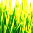 Green grass loopable background - Foto Stock