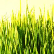 Stock Video: Green grass loopable background