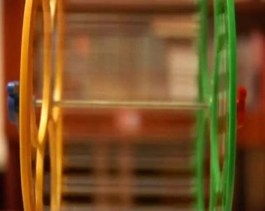 Hamster wheel — Stock Video