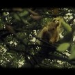 Vídeo de stock: Red squirrel