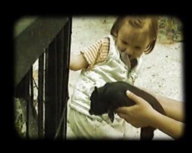 Jogo de menina com porquinho — Vídeo Stock