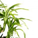 Bamboo — Stock Photo #2266688