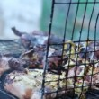 Quails on grill part 1 — Stock Video