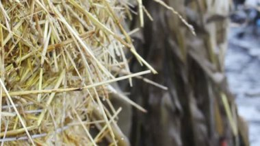 Straw bale — Stock Video