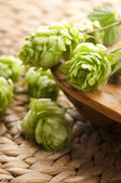 Hop cone and leaves — Stock Photo