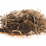Detail of bird eggs in nest — Stock Photo #34796169