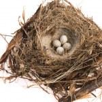 Detail of bird eggs in nest — Stock Photo #34796245