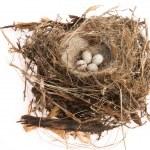 Detail of bird eggs in nest — Stock Photo #34796459