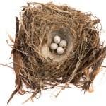 Detail of bird eggs in nest — Stock Photo #34796495