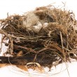 Detail of bird eggs in nest — Stock Photo