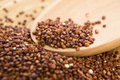 Red Quinoa grain — Stock Photo
