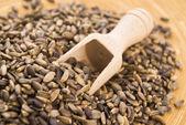 Seeds of a milk thistle (Silybum marianum, Scotch Thistle, Maria — Stock Photo