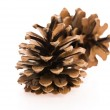 Brown pine cone isolated on white background — Stock Photo #48791075