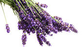 Lavender flowers on the white background — Stock Photo