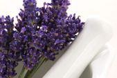 Lavender flowers in a mortar — Stock Photo
