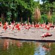 Stock Photo: Running Pink Flamingos