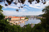 Prague Through Trees — Stock Photo