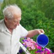 Senior Man Watering Flowers — Stock Photo