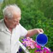 Senior Man Watering Flowers — Stock Photo
