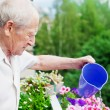 Concentrated Senior Watering Flowers — Stock Photo #22641765