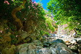 In the bottom of Kourtaliotiko gorge — Stockfoto