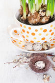 The big cup with narcissus and quail eggs — Stock Photo