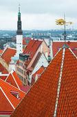Dachy starego tallina — Zdjęcie stockowe