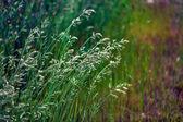 Wild green grass — Stock Photo