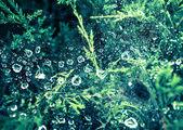Gotas de agua sobre la tela de araña — Foto de Stock