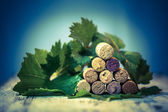 Corks wine with grape leaves — Stock Photo