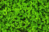 Green leaves background. — Stock Photo