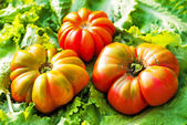 Tomatoes on green leaves — Stock Photo