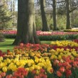 Park Keukenhof — Stock Video