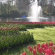 Red tulips and Fountain — Stock Video