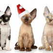 Stock Photo: Cats in Christmas red hat