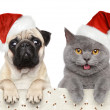 Dog and cat in red Christmas hat — Stock Photo