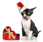 Devon Rex kitten in Santa Christmas red hat — Zdjęcie stockowe