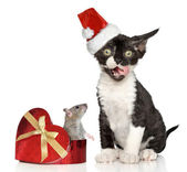 Devon Rex kitten in Santa Christmas red hat — Stock Photo
