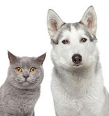 Cat and dog. Closeup portrait — Stock Photo