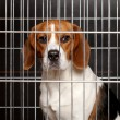 Dog in cage — Stock Photo #21290721