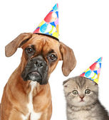 Dog and cat in party cap on white background — Stock Photo