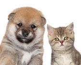 Puppy and kitten, close-up portrait — Stock Photo