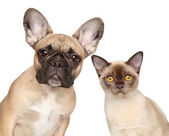 Close-up portrait of a cat and dog — Stock Photo
