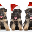 German shepherd puppies in red Santa hat — Stock Photo