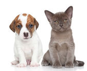Puppy and kitten on white — Stock Photo
