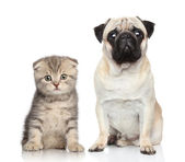 Chien et chaton — Photo