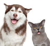 Happy pets on white background — Stock Photo
