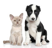 Kitten and puppy together — Stock Photo