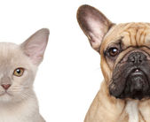 Cat and Dog, half of muzzle close-up portrait — Stock Photo
