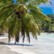 Anse Volbert Beach on Praslin in Seychelles — Stock Photo